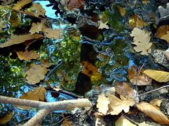 erdei koboldok / forest kobolds (debreczeniemoke) Tags: autumn forest puddle walk ősz erdő séta tócsa morgó erdeikoboldok forestkobolds