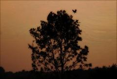 Silhouette (blmiers2) Tags: trees newyork nature silhouette nikon dusk d40x blm18 blmiers2