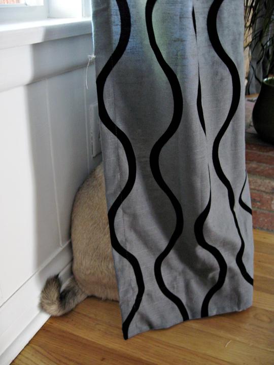 pug hiding behind curtain -1