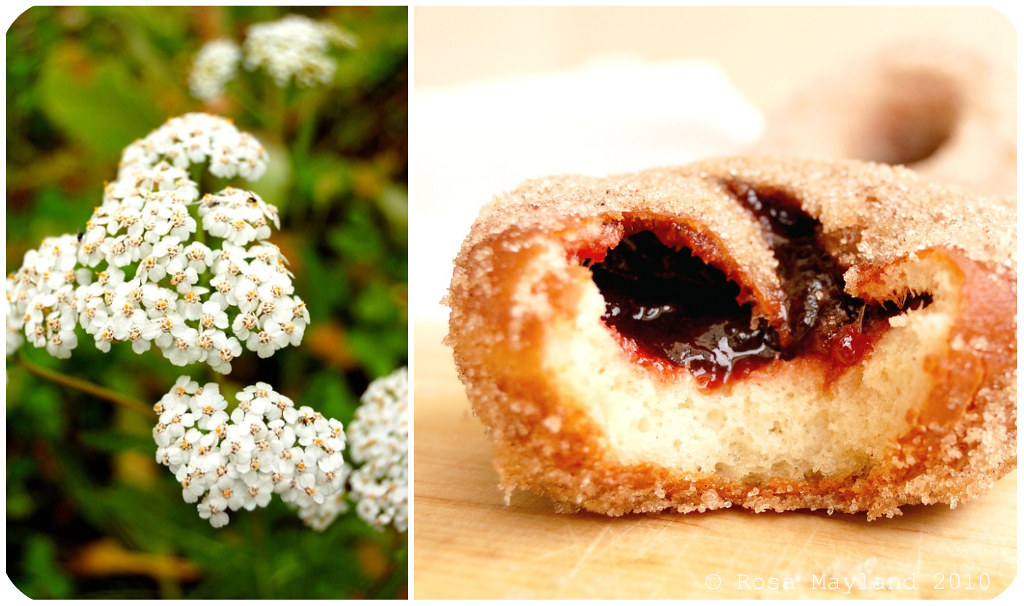 Doughnuts Picnik collage 5 bis