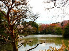 Pond in Ryoan-ji Temple Kyoto, Japan (Hopeisland) Tags: plant nature japan garden spring kyoto blossoms zen sakura cherryblossoms rockgarden zengarden  ryoanjitemple             mygearandmepremium
