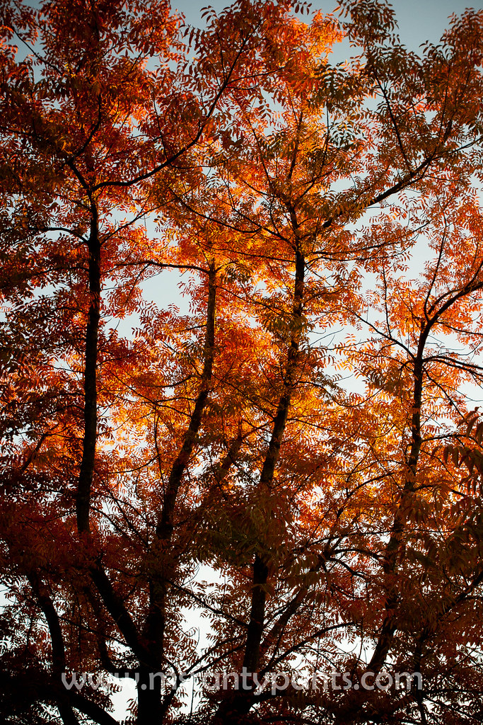 Fall Color 2010-13.jpg