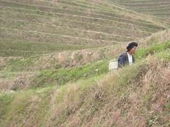 DSCN9532 (followingcha) Tags: guanxi 49avril2007