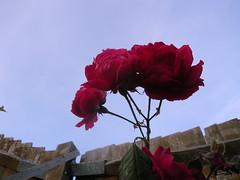 Flower - Nikon E4600
