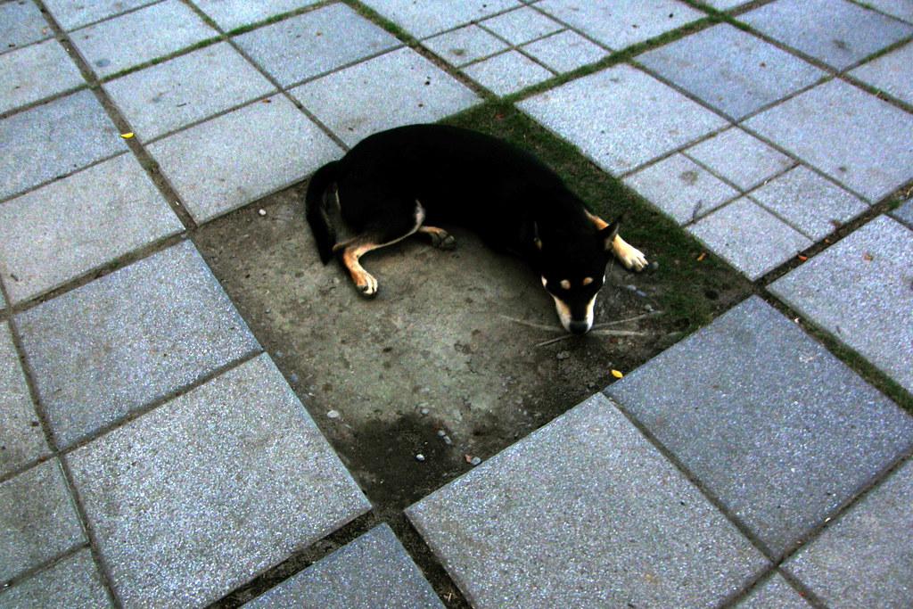 The Dog - P6240009