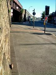unseen victim #1 (in perspective) (Harry Halibut) Tags: bridge fish broken dead lights traffic sheffield railway images perch allrightsreserved corbystreet imagesofsheffield andrewpettigrew