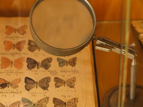 蝶のスケッチ