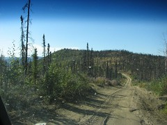 Road to moose camp