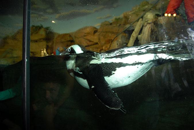 PenguinDSC_5059