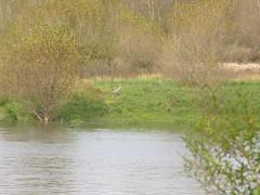 Bords de Loire à Sandillon