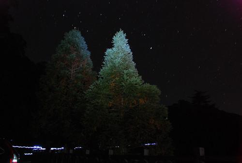 偷學財大師用頭燈照樹