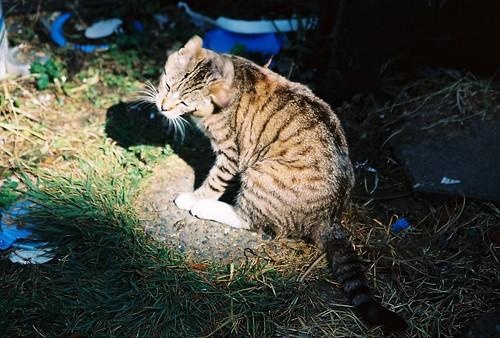 I've Got An Itch... Starlight the Good Son Feral Cat