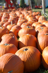 Meadowbrook Pumpkin Farm by mbaylor, on Flickr
