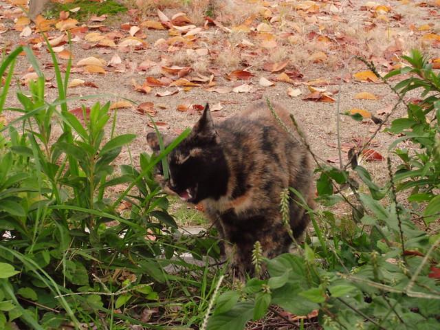 Today's Cat@2010-11-08