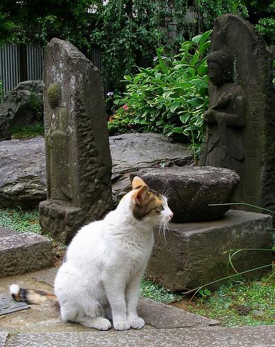 Temple cat