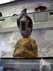Surveillance bird