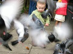 Scattering Pidgeons