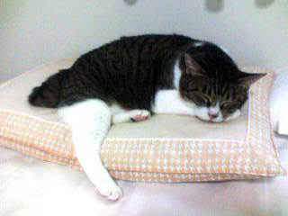 枕猫 #1