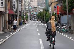 [フリー画像] [動物写真] [哺乳類] [イヌ科] [犬/イヌ] [柴犬/シバイヌ] [自転車] [街角の風景] [日本風景]   [フリー素材]