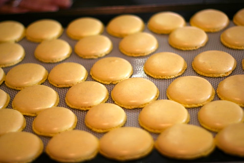 Macarons out of the oven
