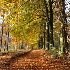 The wood near Veenendaal (Cajaflez) Tags: wood autumn holland bravo utrecht herfst nederland thenetherlands pic bos rhenen topshots natureselegantshots 100commentgroup saariysqualitypictures defensieweg