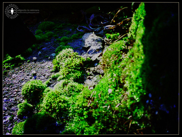 Moss, Shadow & Light