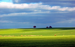 green landscapes (carlos jm) Tags: espaa sun tree verde green d50 landscape arbol lights interestingness spring spain nikon ray shadows natural paisaje fields lonely soe extremadura naturesfinest supershot mywinners abigfave shieldofexcellence anawesomeshot impressedbeauty superbmasterpiece