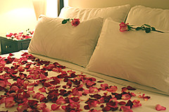 () Tags: sanfrancisco california roses music usa love rose candles romance gifts gift hotels resorts sausalito inns spas getaways gardenias sfbayimagescom