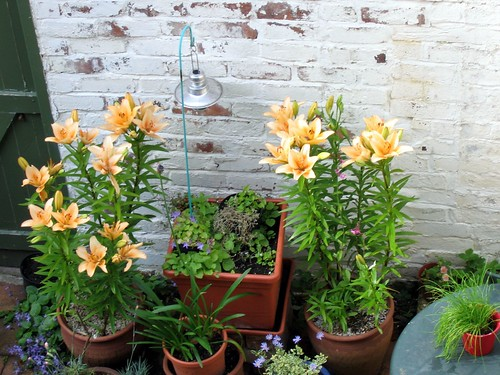 Lilies from the bathroom window