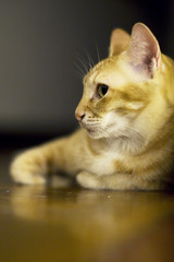 sphinx (dubbie) Tags: friends cats animals floors reflections sandwich notmycat canonef50mmf12lusm atrenyungshouse