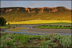 The Lamar Valley of Yellowstone National Park ([Christine]) Tags: morning yellowstonenationalpark wyoming soe naturesfinest lamarvalley instantfave abigfave anawesomeshot impressedbeauty diamondclassphotographer