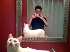 Mirror me and cat