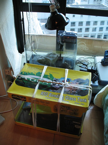 fish aquarium tank turtle denn