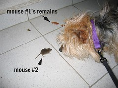 Cat's two mouse kills