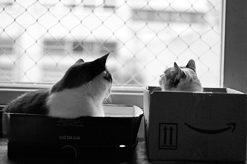 Cats and boxes!!! by fofurasfelinas.