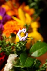 Tiny shy fellow (eftimov-schenk-schwartz) Tags: flowers macro colours naturesfinest colorphotoaward superbmasterpiece colourartaward