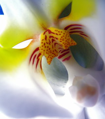 It's cooler. Is the AC on orchid it be Fall? (kevin dooley) Tags: camera flowers red arizona people white orchid flower color macro fall nature floral fleur beautiful face yellow closeup fleurs cat canon insect spectacular fun nose person photography book interesting fantastic eyes funny colorful flickr dof desert mask very bokeh good awesome creative vivid commons best powershot explore most stunning excellent intriguing forehead chandler popular striking visual brilliant magnificent personified tabletop supreme g7 apparent 25faves aplusphoto superhearts orcould whenyellowandreddontmakeorange waituntiligetanewmacrolens didyouknowtheflowerwaslaidonatrampolineforthisshot virtualjourney virtualjourneygallery book0