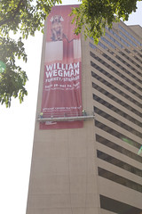 Orange Barrel Wegman banner