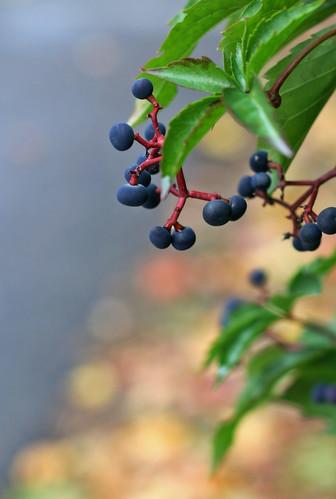 Autumn Colours -5