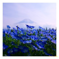 SummerRitual (Annie ( 00 )) Tags: flowers blue summer plants flower nature japan lumix fuji wildlife panasonic mount annie vegetation ritual   yamanashi naka  gf1 explored annienaka