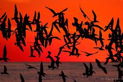 Red Dawn (Nikographer [Jon]) Tags: fall newjersey october fuji oct nj cm pro fujifilm capemay atlanticocean 2010 s5 fujifilms5pro imagesforblog1 photocontesttnc11 20101018fs50710 cmnj