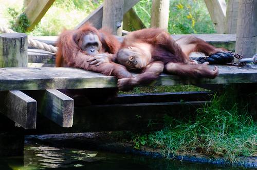 Zoo Boo 2010-242