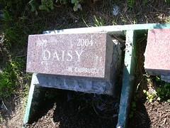 cat gravestone