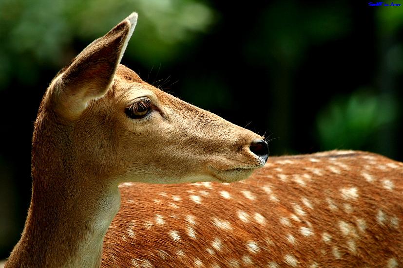 """""""My"""" Deer"""