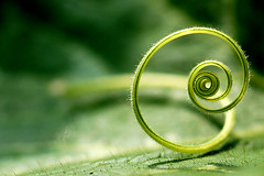 A musical note (Matthew Fang) Tags: music plant macro green nature beautiful closeup d50 interesting nikon bravo dof image line exquisite finest natures mosic naturesfinest musicalnote isawyoufirst favemegroup6 top20green diamondclassphotographer flickrdiamond ishflickr ysplix tabliecloth