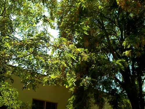 Trees outside