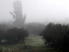 Niebla en Til Til (Jorgelixious) Tags: fog finepix campo fujifilm niebla s5600 tiltil