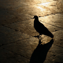 Crepsculo cataln (Christine Lebrasseur) Tags: barcelona street travel france bird art 6x6 animal yellow canon spain 500x500 400d bestofr welcomegrosbissou vosplusbellesphotos allrightsreservedchristinelebrasseur