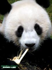 I want bamboo