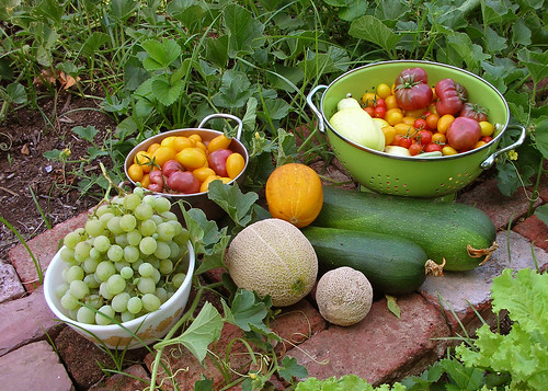 Harvest-y